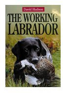 The Working Labrador from Gundog Solutions